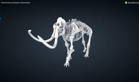 Musei virtuali e condivisione della conoscenza: lo Smithsonian e la sua collezione digitale